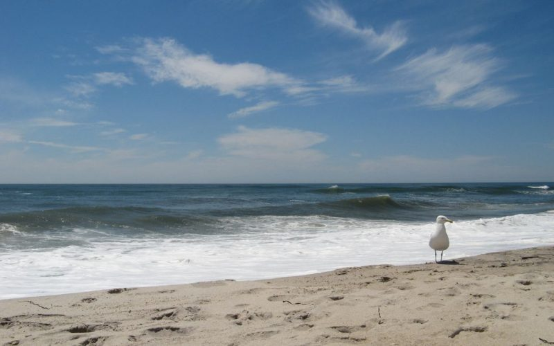 "Why is Hampton Bays the New ""East End Destination?"""